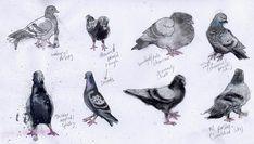 Rose Sanderson - Portfolio - Drawings and Etchings