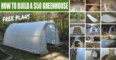 How to Build a $50 Greenhouse- Free Plans