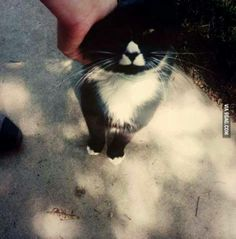 Awesome #Zelda Triforce kitty : Link would just die if he saw this!