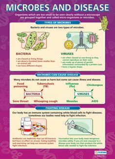 Microbes and Disease Poster