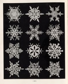 snowflakes photographed by wilson alwyn bentley (ca. 1900)