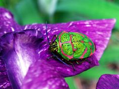 Bug on leaf by Nemo's great uncle, 06/06/2006 Japan