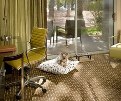 12 Hotels Where You And Your Pet Can Relax Together In Style , – Dog Kennel – pet resort Scottsdale Resorts, Scottsdale Arizona, Luxury Dog Kennels, Miss My Best Friend, Pet Resort, Resort Spa, Dog Kennel Designs, Dog Friendly Hotels, Pet Hotel