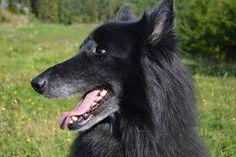 Gårdstunet Hundepensjonat: Herlig, sommerlig søndag med flotte hunder på tune...