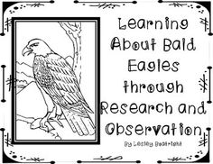 Learn more about Bald Eagles by researching the answers to seven questions, writing the answers, and drawing a matching illustration. Using the Ea. Elementary Science, Science Classroom, Teacher Tools, My Teacher, Classroom Freebies, Classroom Ideas, First Grade Science, Bald Eagles, American Symbols