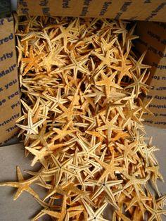 Starfish 80 Tan starfish 1 to 1 1/2 inches. For por acraftyboomer