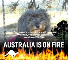 Our prayers and thoughts go out to everyone in Australia, bot humans and animals, we praying this nightmare will be over soon :( Share My Life, Dog Information, Dog Stories, Amazing Adventures, Domestic Violence, Dog Care, Dog Friends, Rescue Dogs, Prayers