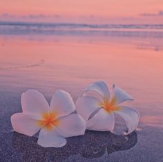 ❣ Plumeria Flower Ocean Sea Beach Sunrise Sunset Ocean Wallpaper, Summer Wallpaper, Cute Wallpaper Backgrounds, Pretty Wallpapers, Nature Wallpaper, Beach Aesthetic, Flower Aesthetic, Tropical Flowers, Tropical Vibes