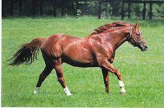Secretariat Thoroughbred Horse Postcard Triple Crown Winner 1973 | eBay