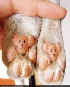 Teddy bear toes! Now THIS is really getting creative!!