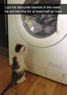 Ever since, people have been making and sharing cat memes, making their favorite kitten famous in a wide array of hilarious cats memes that never fail to crack us up. These hilarious cats especiall… Funny Animal Jokes, Funny Cat Memes, Cute Funny Animals, Funny Animal Pictures, Animal Memes, Cute Baby Animals, Funny Pet Quotes, Funniest Quotes, Funny Cute Cats
