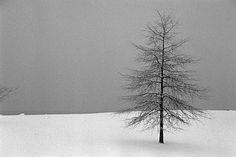 Debranne Cingari, The Loner, Ed. 2/10, 2006, silver gelatin photograph, 20 X 30 inches