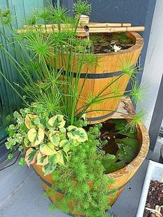Container water gardens also known as still pots pond pots