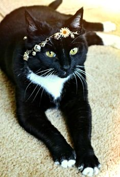 "* * "" Somehow, me feelz a bit royal wif  de daisy chain. Thanx, human. Dis reassures dat yoo loves me."""