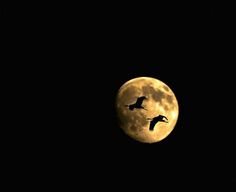 geese in the moon
