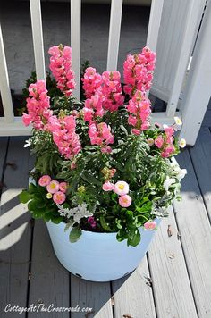 spring flowers in painted pot