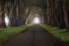 Foggy Road by Casey McCallister on 500px