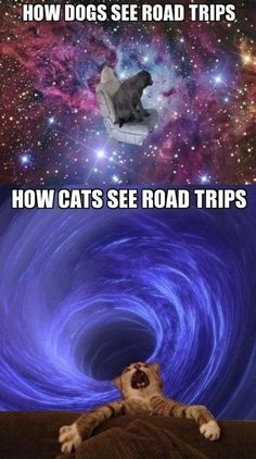 Two minute ride to my cat's vet is the longest ride of my life!!!