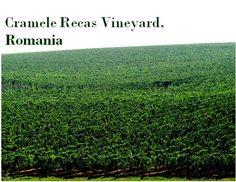 Cramele Recas #Vineyard in #Romania.