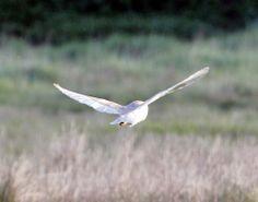 Another Bird Blog: Mostly Menorca