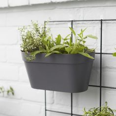 Outdoor Plant Wall Rack | Plant Pots Online London | Patch Outdoor Plants, Potted Plants, Outdoor Gardens, House Plants Decor, Plant Decor, Plant Wall, Plant Pots, Wire Grid Wall, Free Plants