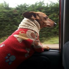 Dachshunds in cars