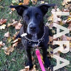 Look at those perky ears! Lucky Lara was adopted at 184 Verona Street thus weekend!