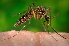 Vírus Zika: o que é e como lidar?