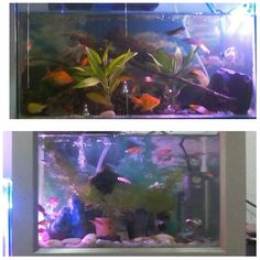 #NEWBE #aquarium #aquascape_diy https://m.youtube.com/watch?feature=em-upload_owner&v=aejGBy_H5qg