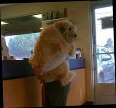 That's 100 most valuable pictures of dogs. Of all times and peoples - - @ashleyallfrey