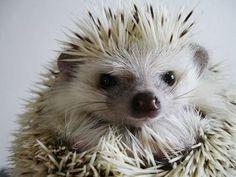spiky fluff puff ball mohawk man. with spikes.