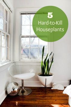 We've said it here before: plants bring life to all living spaces. If you're concerned about killing plants, we've consulted with a plant expert, Debra Prinzing, to bring you the hardiest ones.
