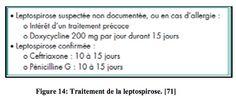 La leptospirose, une zoonose transmissible du rat à l'homme : Le TRAITEMENT-  Juif Marylène - 2011