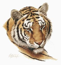 Cat Portraits by Guy Coheleach - Guy Coheleach's Animal Art Animal Paintings, Animal Drawings, Tiger Silhouette, Tiger Sketch, Tiger Artwork, Big Cats Art, Tatoo Art, Gif Animé, Cat Drawing