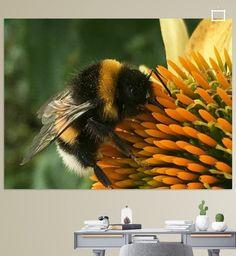 Biene  von Sascha Stein