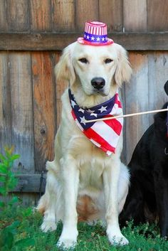 A Lot Of Dogs Will Go Missing Over 4th Of July Weekend. Here Are 9 Tips To Make Sure Yours Won't.