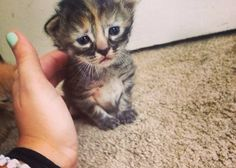 Meet Purrmanently Sad Cat, the adorable kitten who just happens to look sad all the time.