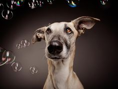 Photograph Most patient dog in the world by Elke Vogelsang on 500px