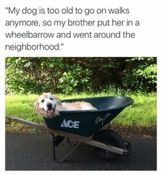 Cute Overload: Internet`s best cute dogs and cute cats are here. Aww pics and adorable animals. Funny Animal Memes, Funny Animals, Cute Animals, Cute Puppies, Cute Dogs, Dogs And Puppies, Faith In Humanity Restored, Happy Dogs, I Love Dogs