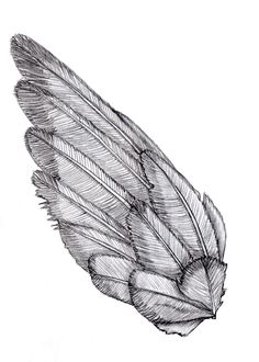 line drawing of a bird wing052a