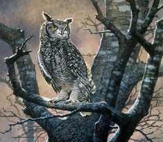 South African Wildlife Art – Page 5 – Johan Hoekstra Wildlife Art Wildlife Paintings, Wildlife Art, Animal Paintings, Nocturne, Rapace Diurne, Wildlife Wallpaper, Spotted Owl, Eagle Art, Owl Pet