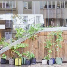 Avec BACSAC cultivez une ville plus verte où la nature retrouve sa place mère !
