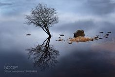 One tree by trevcole. Please Like http://fb.me/go4photos and Follow @go4fotos Thank You. :-)