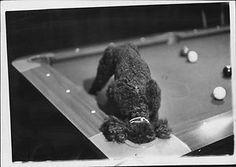 1967 BOSTON BLACK POODLE PRESS PHOTO