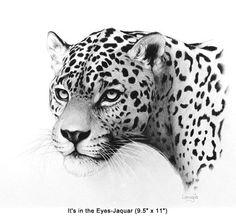 """"""" It's In the Eyes """" jaguar      by Bill Langis"""