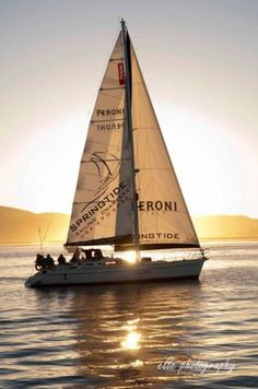 Boat trips - Knysna on the Garden Route Sailing Trips, Sailing Charters, Sailing Yachts, Knysna, Whale Watching, Marine Life, Outdoor Activities, South Africa, Travel Photography