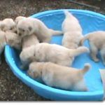 9 Cute Puppy Videos :)  Watch the video below. Pup training really starts the minute you bring a brand-new puppy right into your home. The first week is crucial. Every person in the family should get on the very same page when it involves the regular, obligation and regulations that will be set for the latest member of the family.   This is additionally a great time to be considering pet insurance coverage, as little young puppies have yet to develop a strong immune system or sense o..