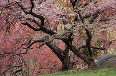 JSPuzzles - puzzles en línea - Cherry Tree