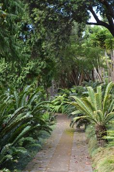 Jardin tropical de Monte
