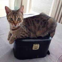 My kitty cat is weird as fuck 😸 #cat #kitty #pet #love #prelove #olomouc #czech #czechmade #kittycat #tyger #animal #happyplacetobein #mypoorbaby